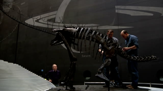 Natural History Museum puts on display it's first complete dinosaur skeleton Stegosaurus GVs More of dinosaur being erected