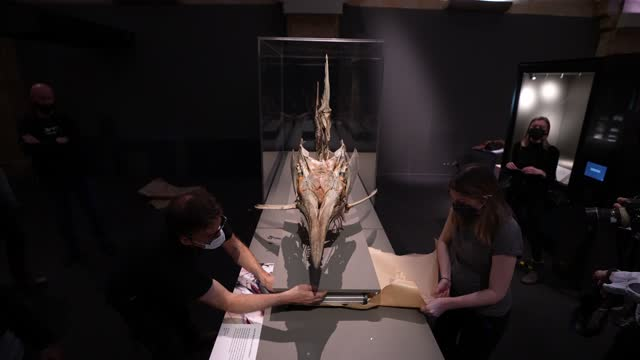 natural history museum workers install a 3m black marlin skeleton for the 'our broken: how we got here and ways to fix it' at the natural history... - installing stock videos & royalty-free footage