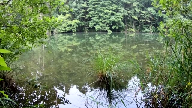 natural lake with alluvial forest and wetland for biodiversity - biodiversity stock videos & royalty-free footage