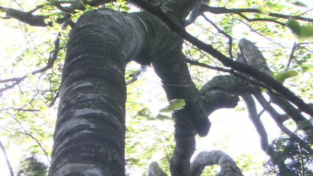 vídeos y material grabado en eventos de stock de natural landscape in virgin forest - árbol de hoja caduca