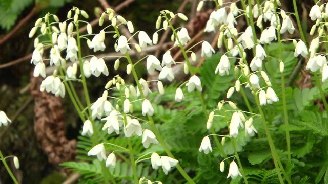 Natural Landscape In Virgin Forest