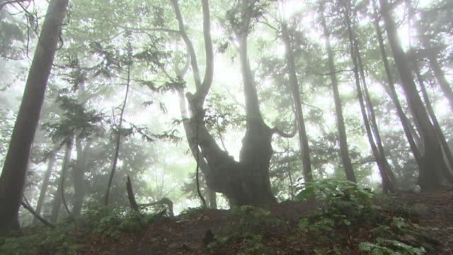 natural landscape in virgin forest - 秋田県点の映像素材/bロール