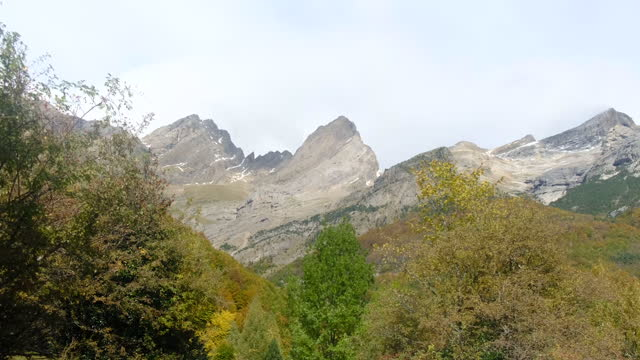vídeos de stock, filmes e b-roll de natural landscape of autumn, winter with leaves falling and golden - forma da água