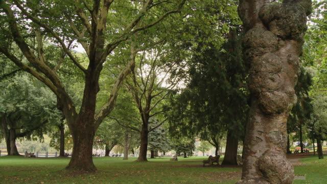 vídeos de stock e filmes b-roll de a natural park with trees - banco de parque