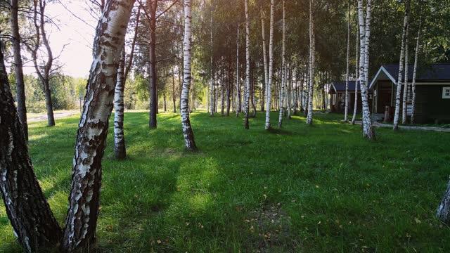 自然公園 - カバノキ点の映像素材/bロール