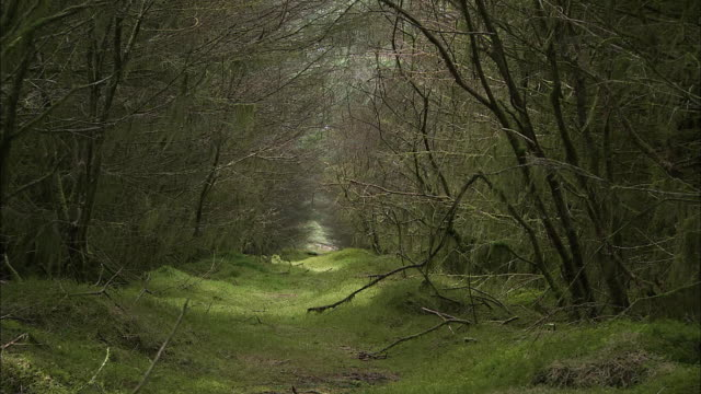 natural path in forest, overhanging trees, zoom out, northern ireland - northern ireland stock videos & royalty-free footage