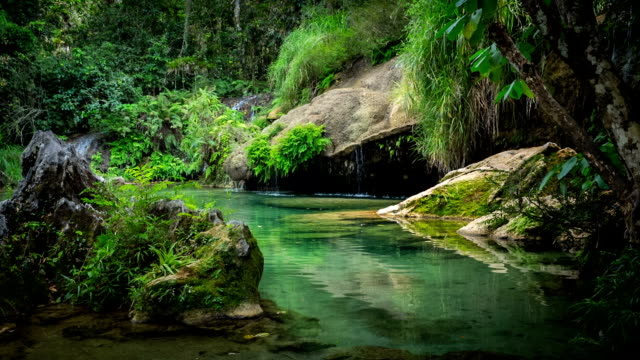 natural pool in the rainforest of cuba - cuba stock videos & royalty-free footage