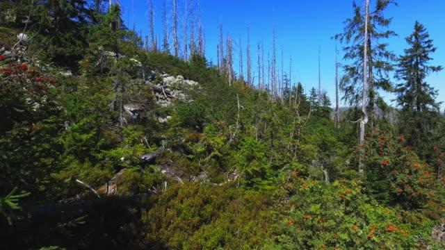 Natuurlijke regeneratie naaldhout bos