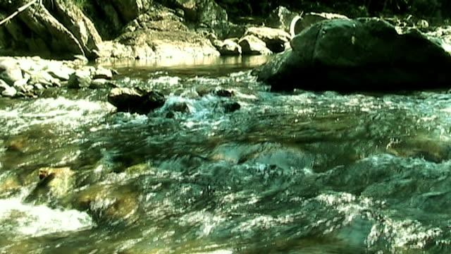 自然の川の森林(アナモルフィック DV 16 :9