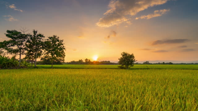 natural scenic field agriculture and rice field sunset 4k time lapse. - day to night time lapse stock videos & royalty-free footage