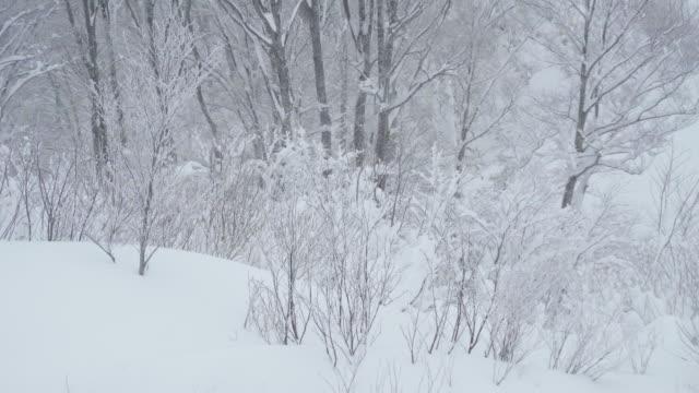 natural snow in winter - 秋田県点の映像素材/bロール