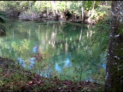 natural spring - aquifer stock videos & royalty-free footage