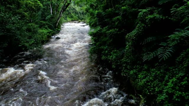 Flux naturel dans une forêt: Hawaii