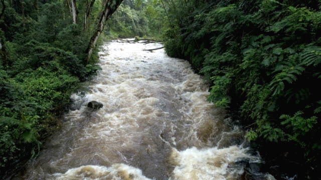 natural stream in a forest: hawaii - inflatable raft stock videos and b-roll footage