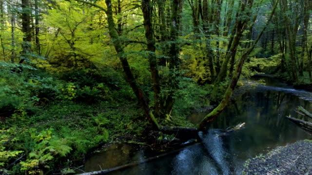 森の中の自然の流れ:太平洋北西部 - 季節点の映像素材/bロール