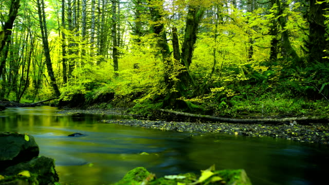 natural stream in a forest: pacific northwest - boreal forest stock videos & royalty-free footage