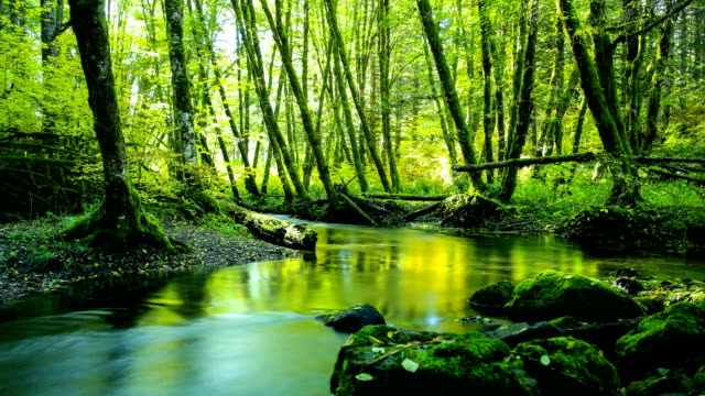 natural stream in a forest: pacific northwest - muschio video stock e b–roll