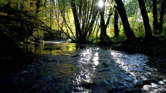 natural stream in a forest: pacific northwest - spring flowing water stock videos & royalty-free footage