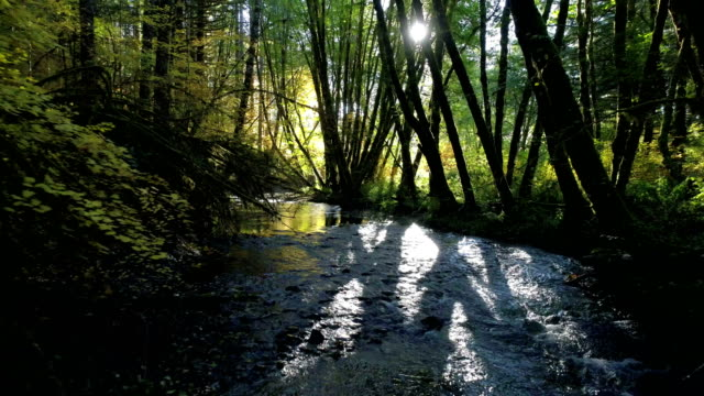 natural stream in a forest: pacific northwest - shade stock videos & royalty-free footage