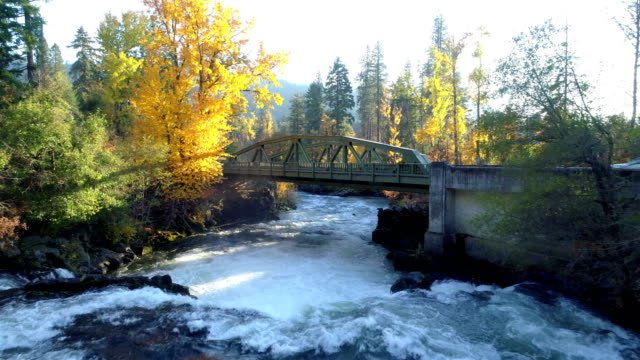 Natural Stream in a forest: White water rapids: Pacific Northwest