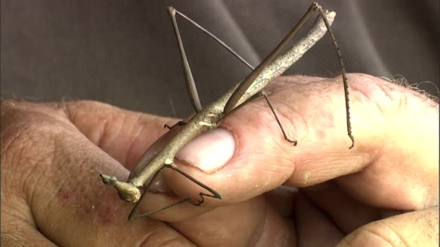 a naturalist examines a praying mantis. - naturist stock videos & royalty-free footage