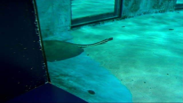 London South Bank London Aquarium INT Stingray PAN repoter to camera