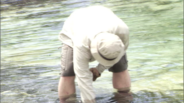 a naturalist uses equipment to take a sample from shallow ocean water. - naturist stock videos & royalty-free footage
