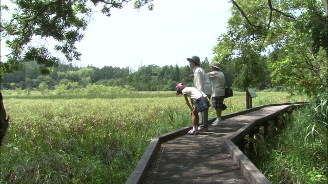 naturalists observe a dragonfly skittering across a clearing. - shimane prefecture stock videos & royalty-free footage