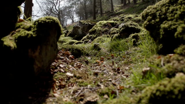 a naturally beautiful ancient woodland - mid wales stock videos & royalty-free footage
