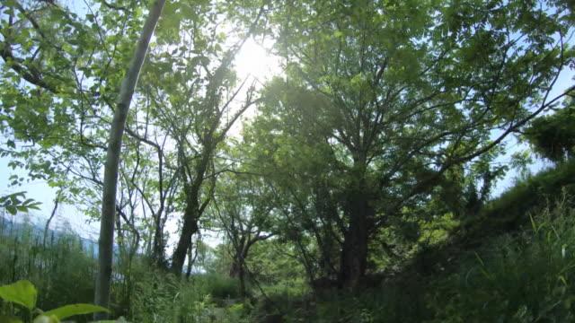 nature along the kuzuryu river in fukui, japan - fukuoka prefecture stock videos & royalty-free footage