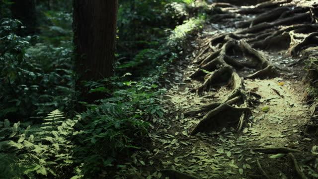 vídeos de stock, filmes e b-roll de natureza e origem na floresta - arcaico