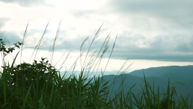 vidéos et rushes de nature et vent, herbe fleur contre le vent avec fond de montagnes tropicales - herbe