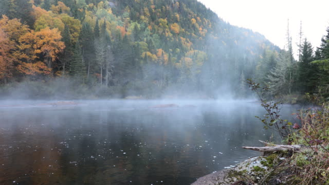 4k nature autumn landscape, quebec, canada - area selvatica video stock e b–roll
