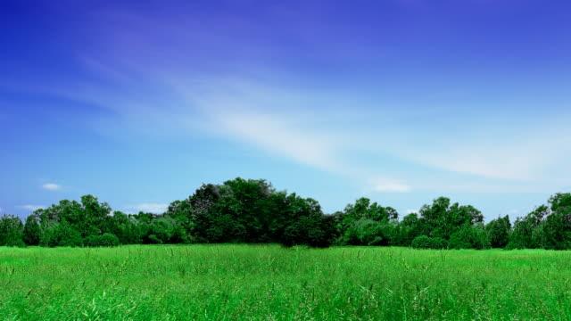 vidéos et rushes de fond de la nature - plaine caractéristiques de la terre