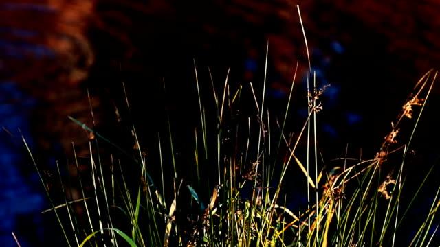 Natur Hintergrund