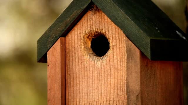 HD Nature Birdhouse and bird