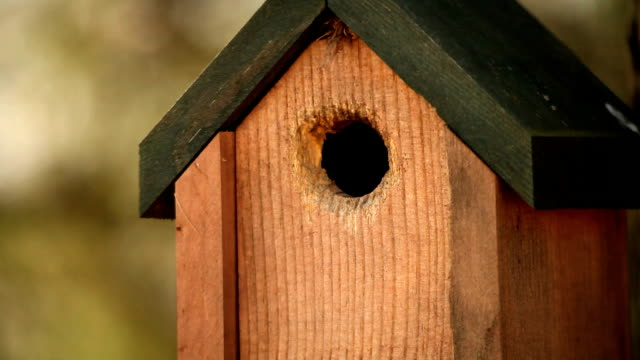 HD Nature Birdhouse and bird with sound