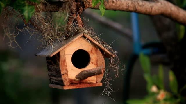 hd nature birdhouse - birdhouse stock videos & royalty-free footage