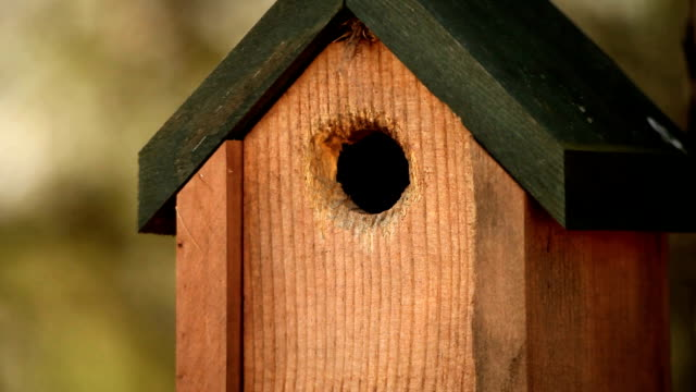hd nature birdhouse with bird sounds - birdhouse stock videos & royalty-free footage