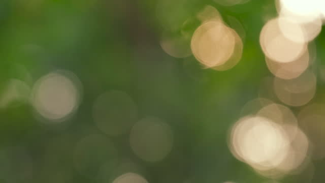 natur bokeh hintergrund - licht lecks und objektiv flares - unscharf gestellt stock-videos und b-roll-filmmaterial