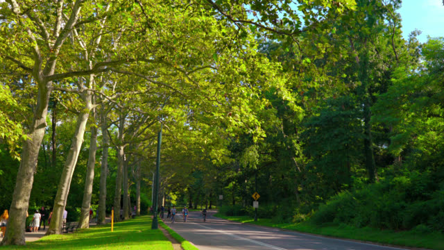nature, central park, new york, usa - central park manhattan stock videos & royalty-free footage