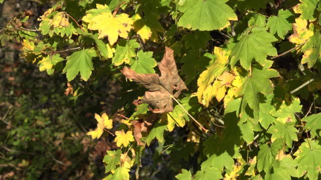 nature dead leaf dangling from tree - zuletzt stock-videos und b-roll-filmmaterial