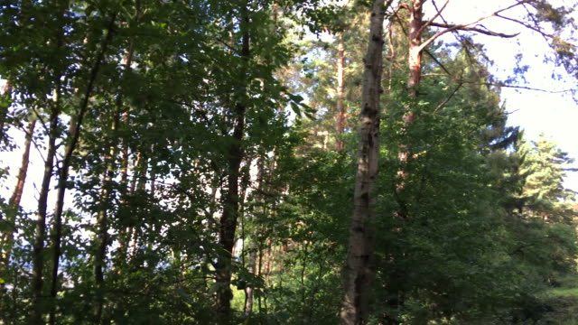 nature, forest, trees, path - spinning point of view stock videos & royalty-free footage