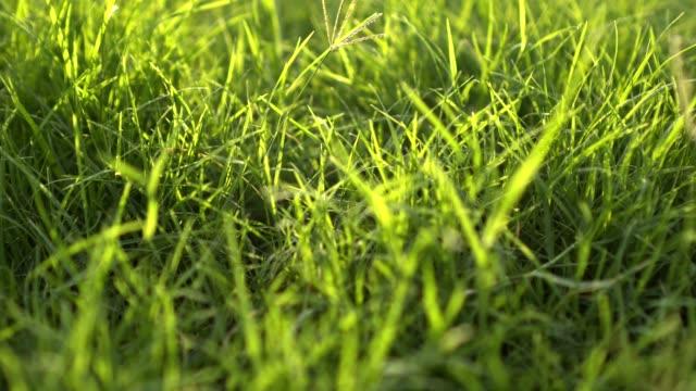 naturen grönt gräs solljus - softfokus bildbanksvideor och videomaterial från bakom kulisserna