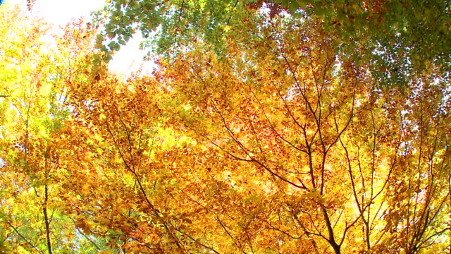 hd: nature in autumn - spinning point of view stock videos & royalty-free footage