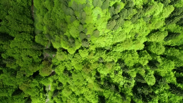 Nature in its glory. Aerial view over beautiful mountain green pine forest.