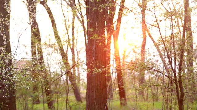 vidéos et rushes de la nature à la fin de l'été - en dernier