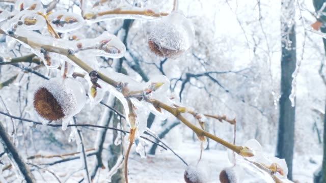 nature in winter season. - icing stock videos and b-roll footage