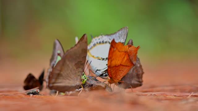 vídeos y material grabado en eventos de stock de insecto de la naturaleza - mariposa lepidópteros