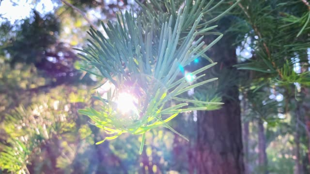 nature inspiration trees - pine stock videos & royalty-free footage